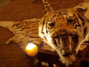 Objets décoratifs et insolites au sein du lodge africain